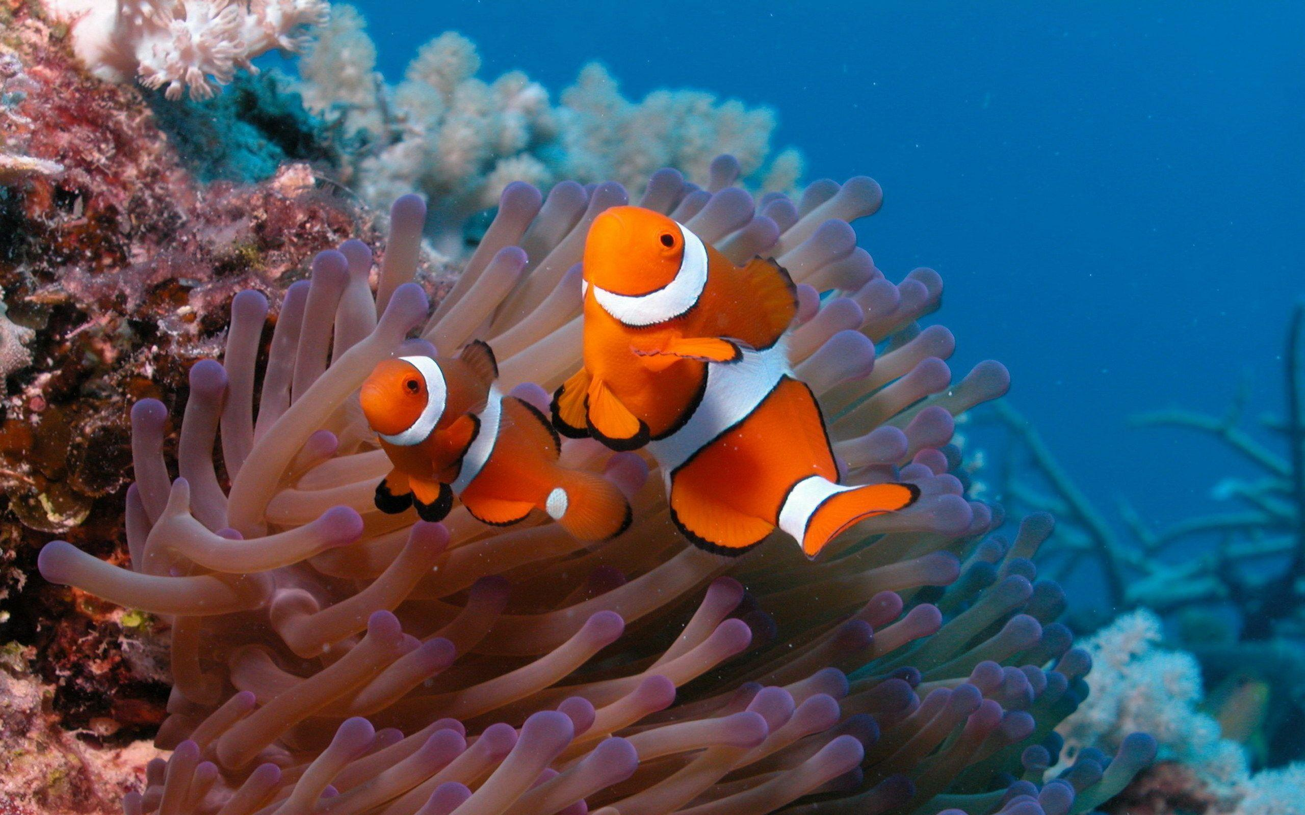 Coral Reef Fish Wallpapers - HD Wallpapers Inn