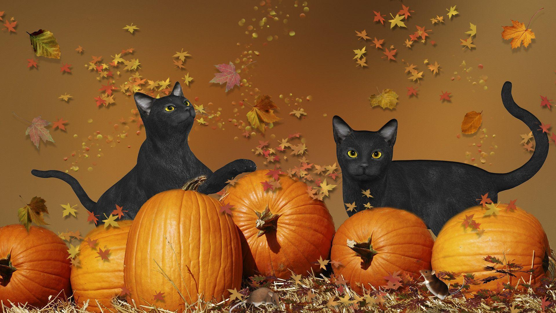 Wallpapers For > Cute Cat Halloween Wallpaper