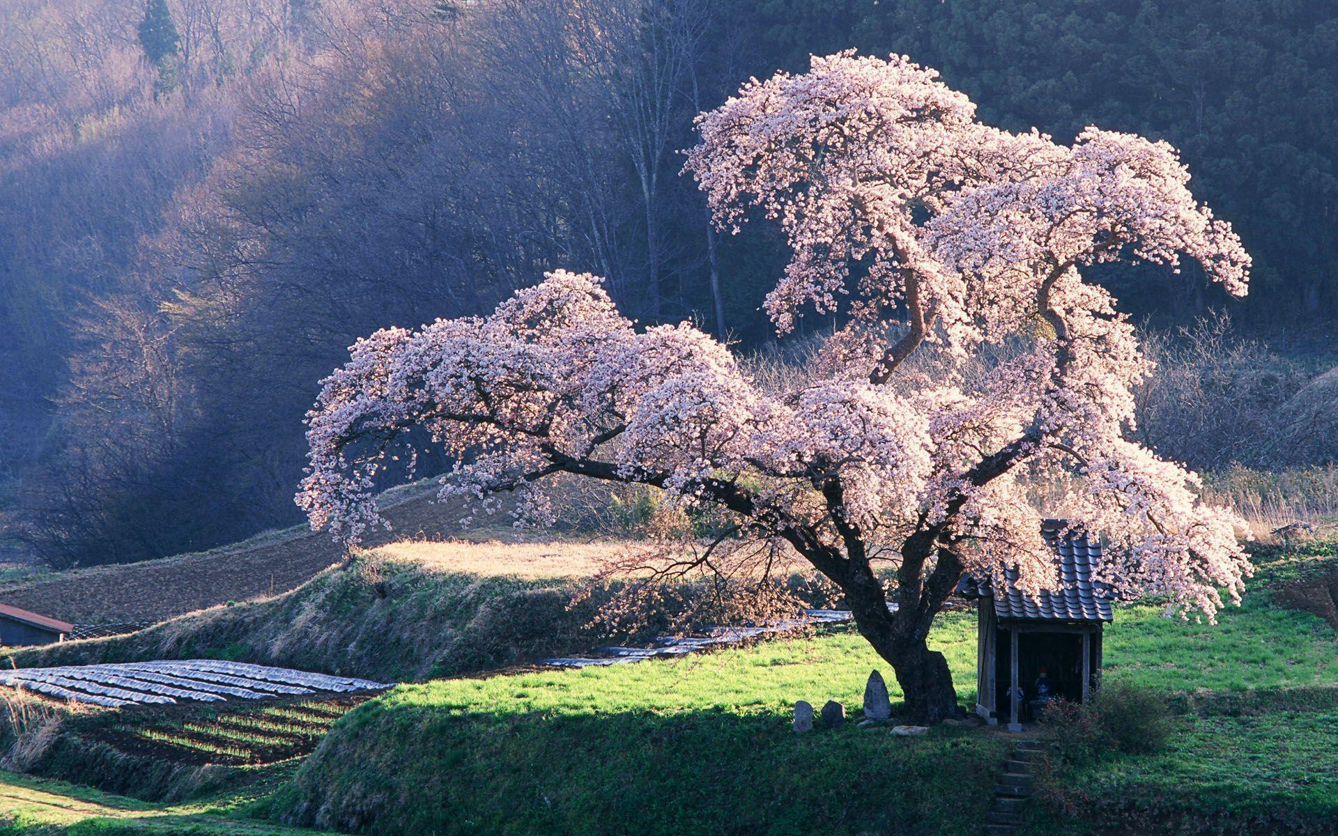Japanese Natural Scenery