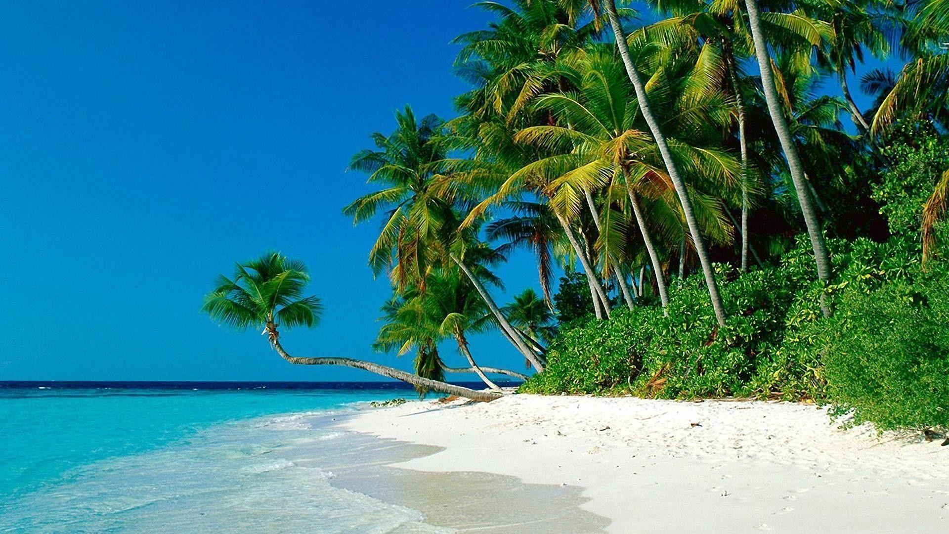 Tropical Beaches With Palm Trees Wallpapers Hd Pictures 4