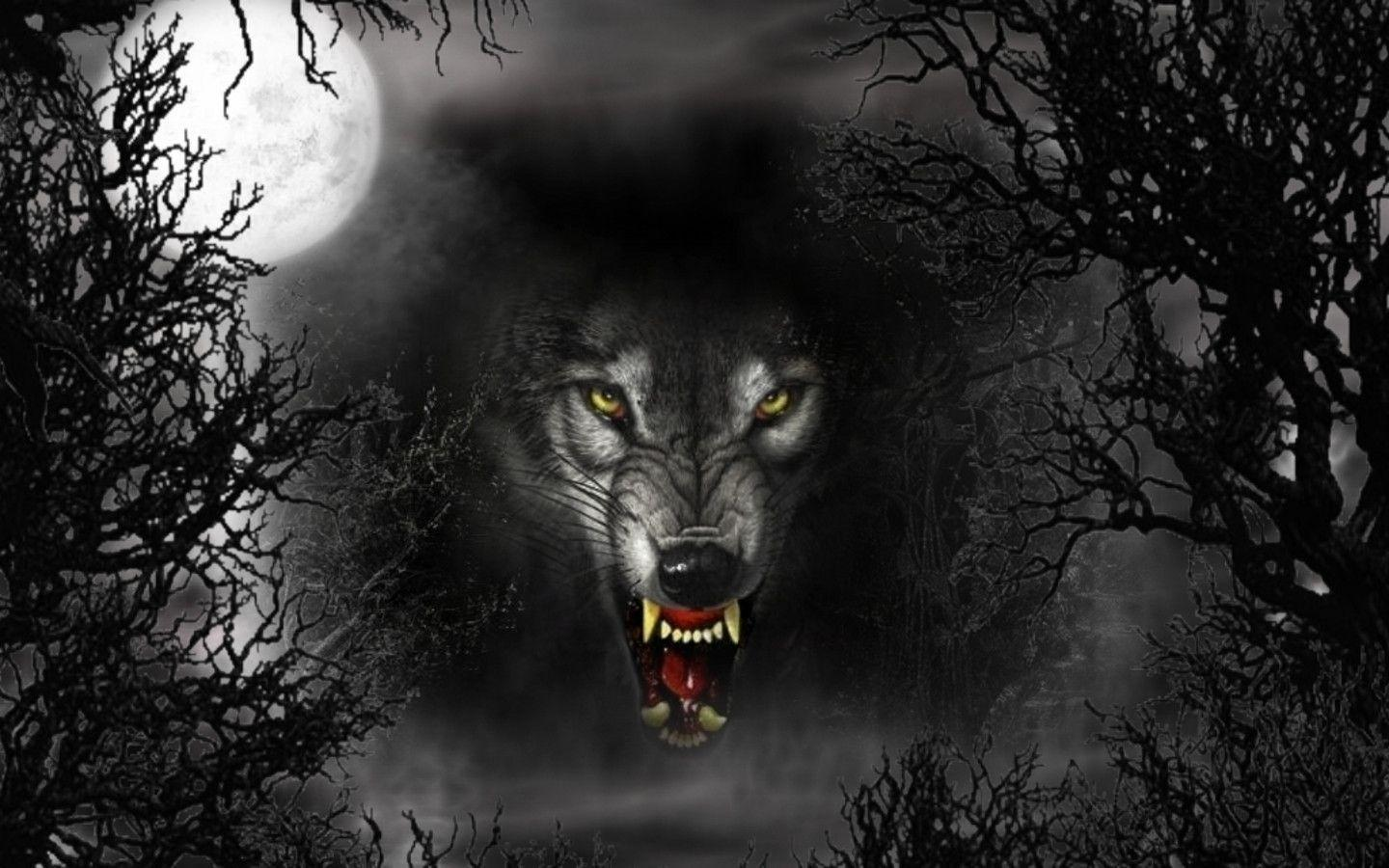 Black Wolf Wallpapers and Backgrounds