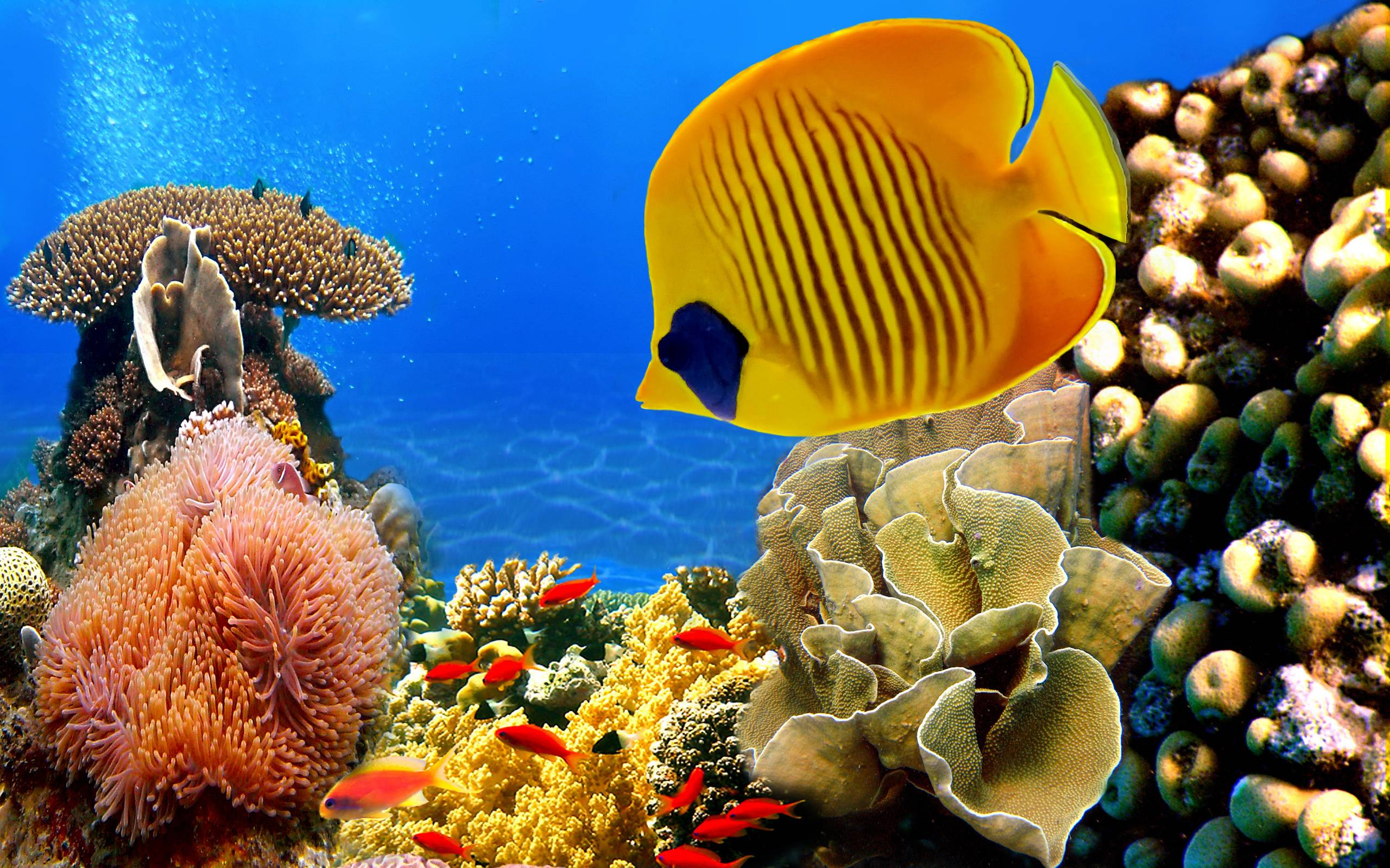 Tropical Fish Wallpapers for Desktop