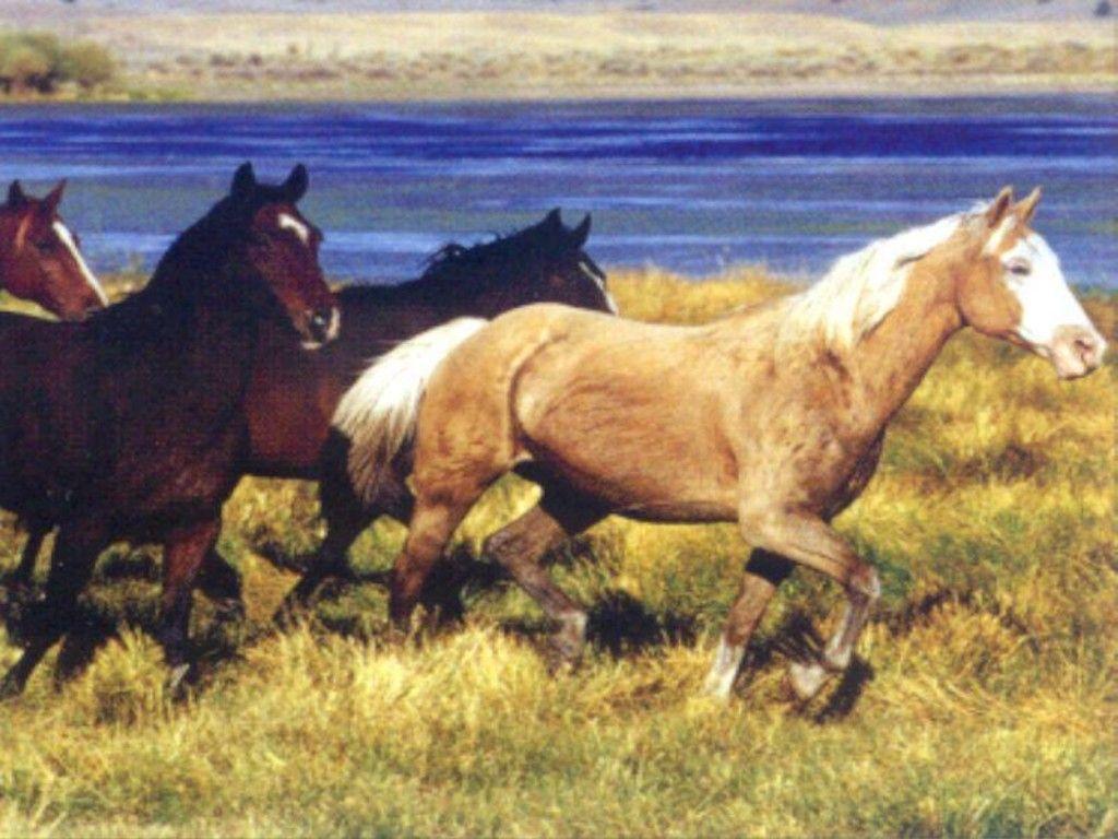 wild horses running wallpapers - photo #24