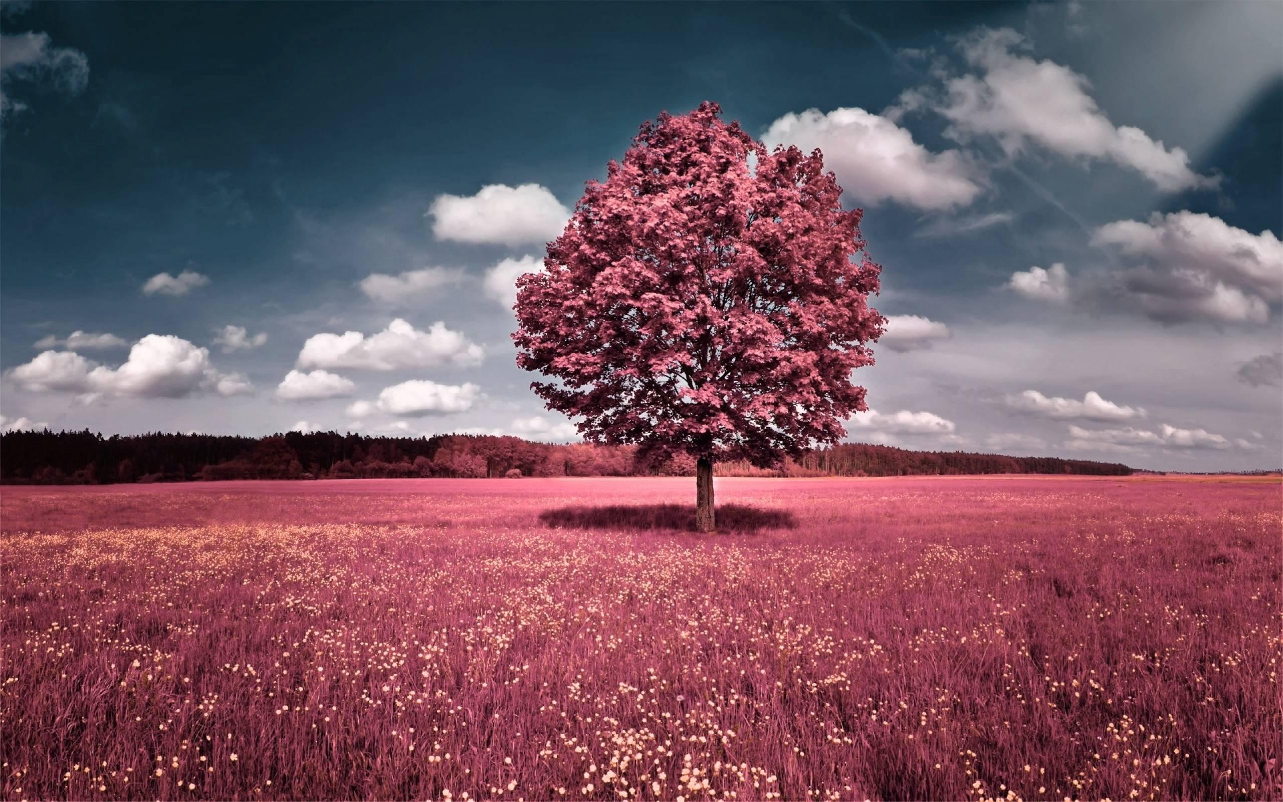 Pink Tree Nature Scenery Wallpaper HD #8729 #3044 Wallpaper | SpotIMG