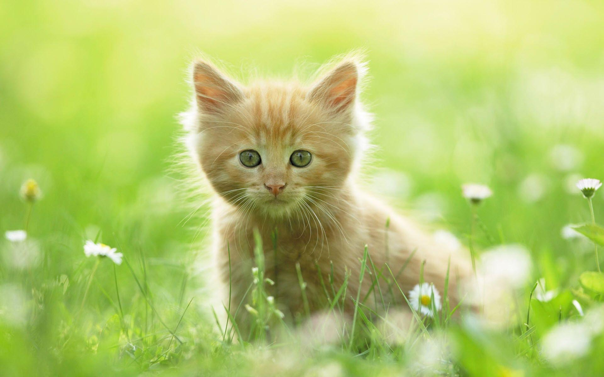 cute kitten desktop wallpapers