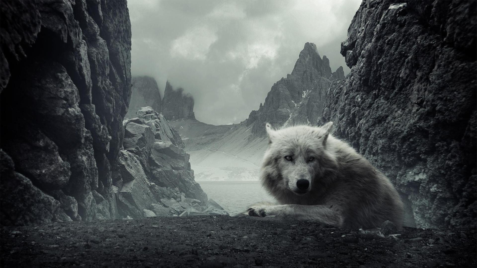 Wallpapers For > White Wolf Wallpaper 1920x1080