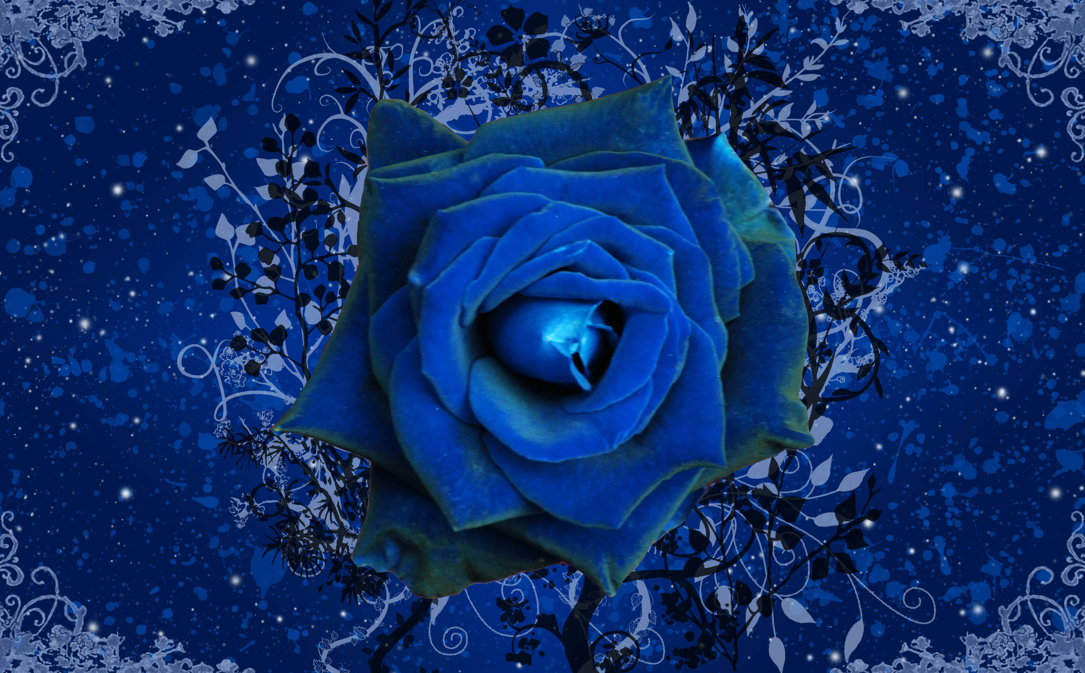 Blue-Rose- Wallpaper
