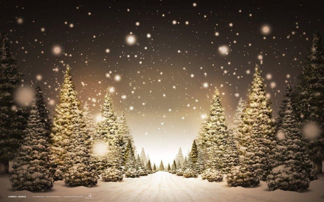 Christmas Trees Backgrounds Wallpaper Cave