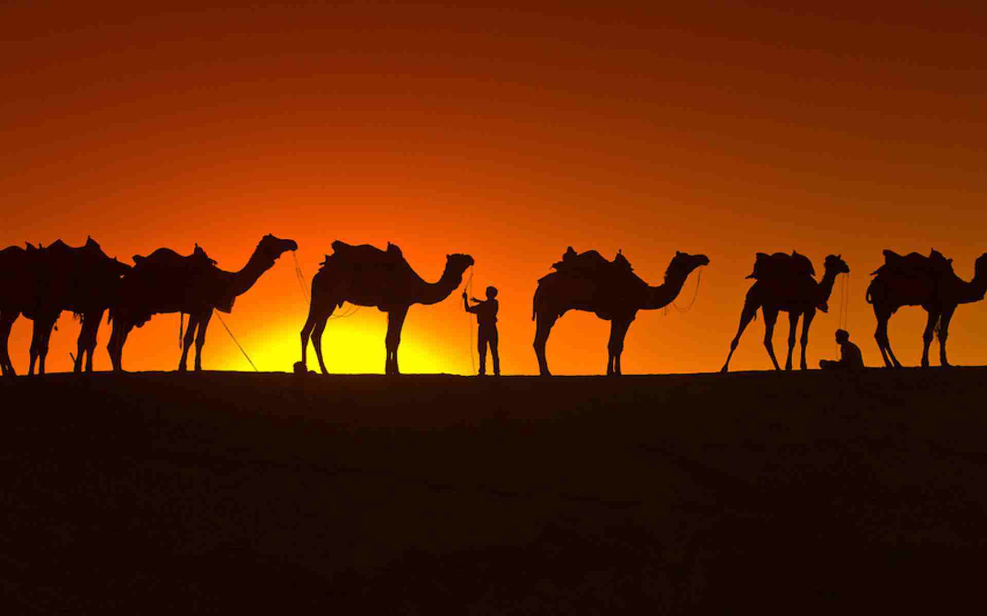 desert and camel wallpaper hd - photo #27