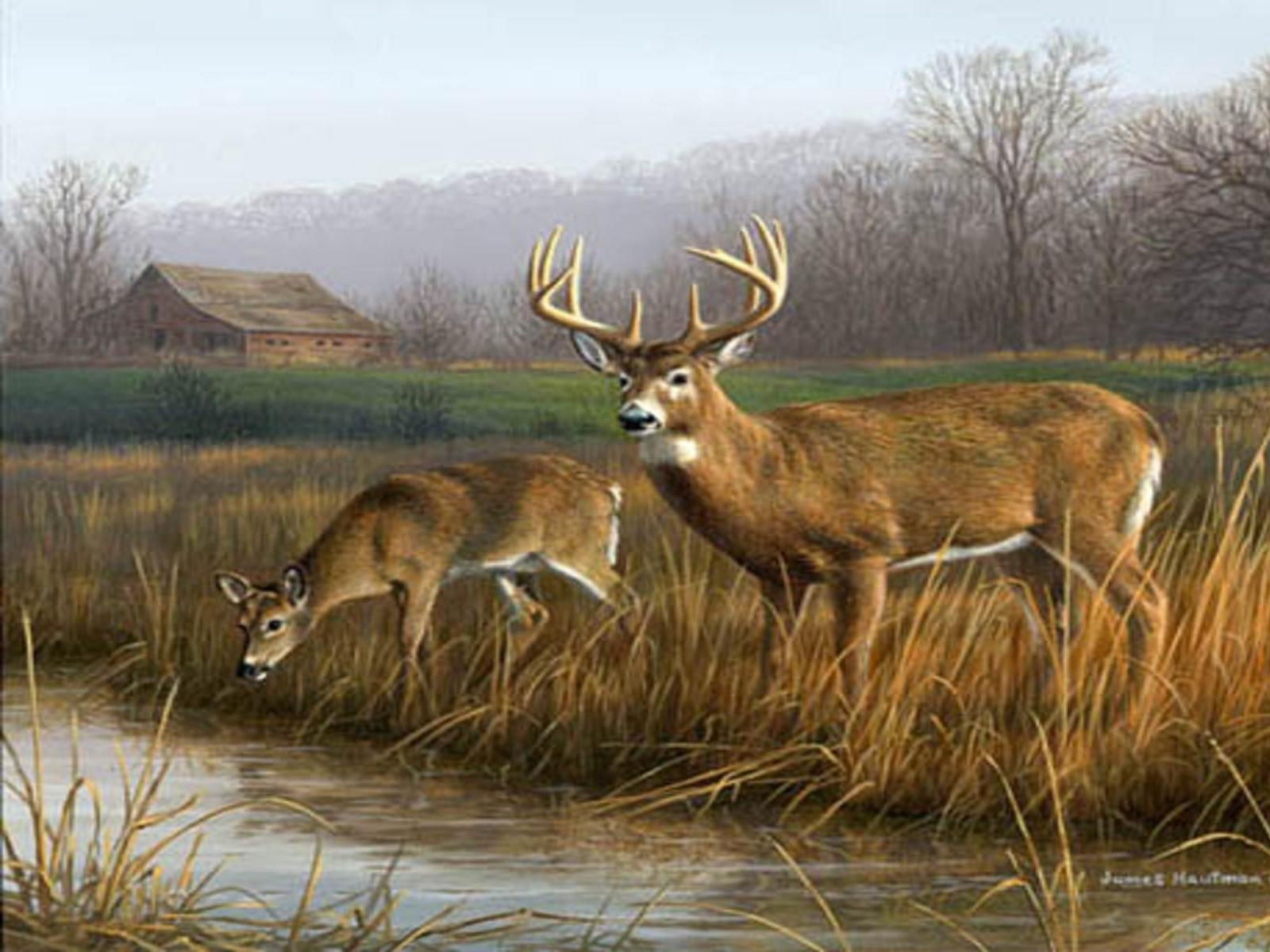 Wallpapers For > Whitetail Deer Wallpapers 1920x1080