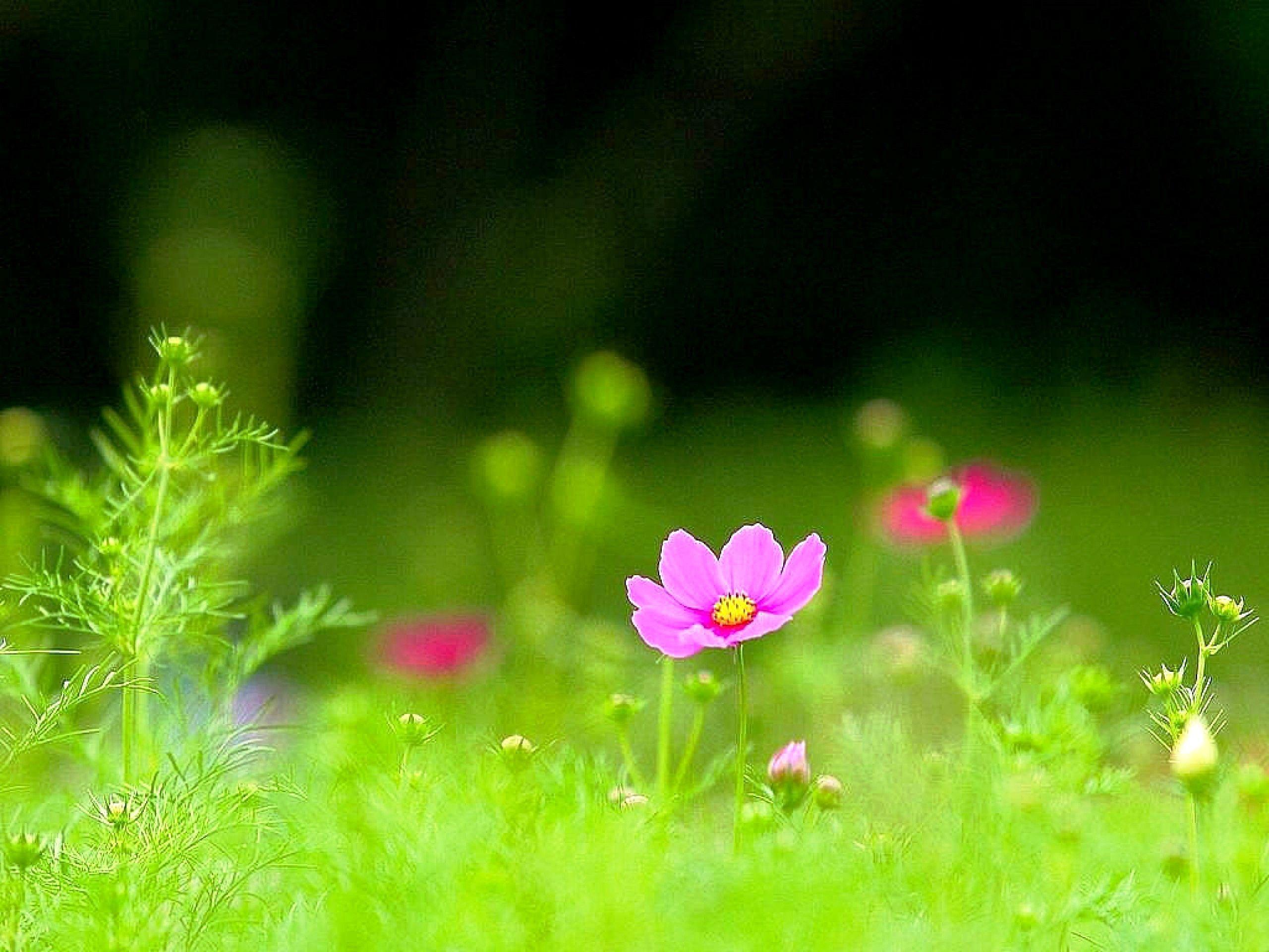 beautiful green grass wallpapers - photo #19