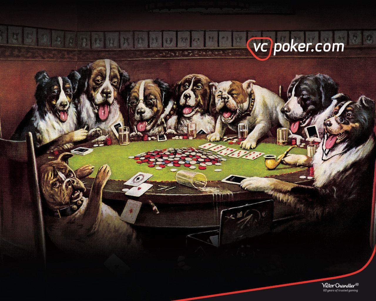 poker hunde
