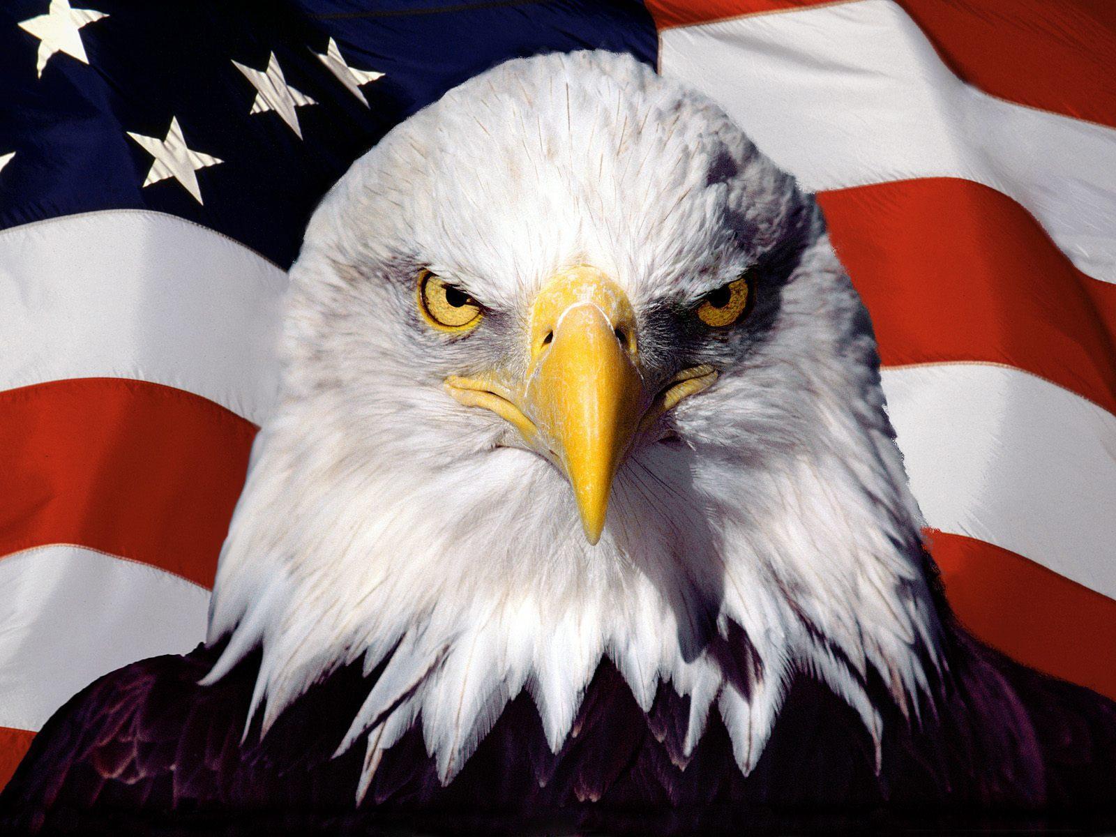 Bald Eagle Background