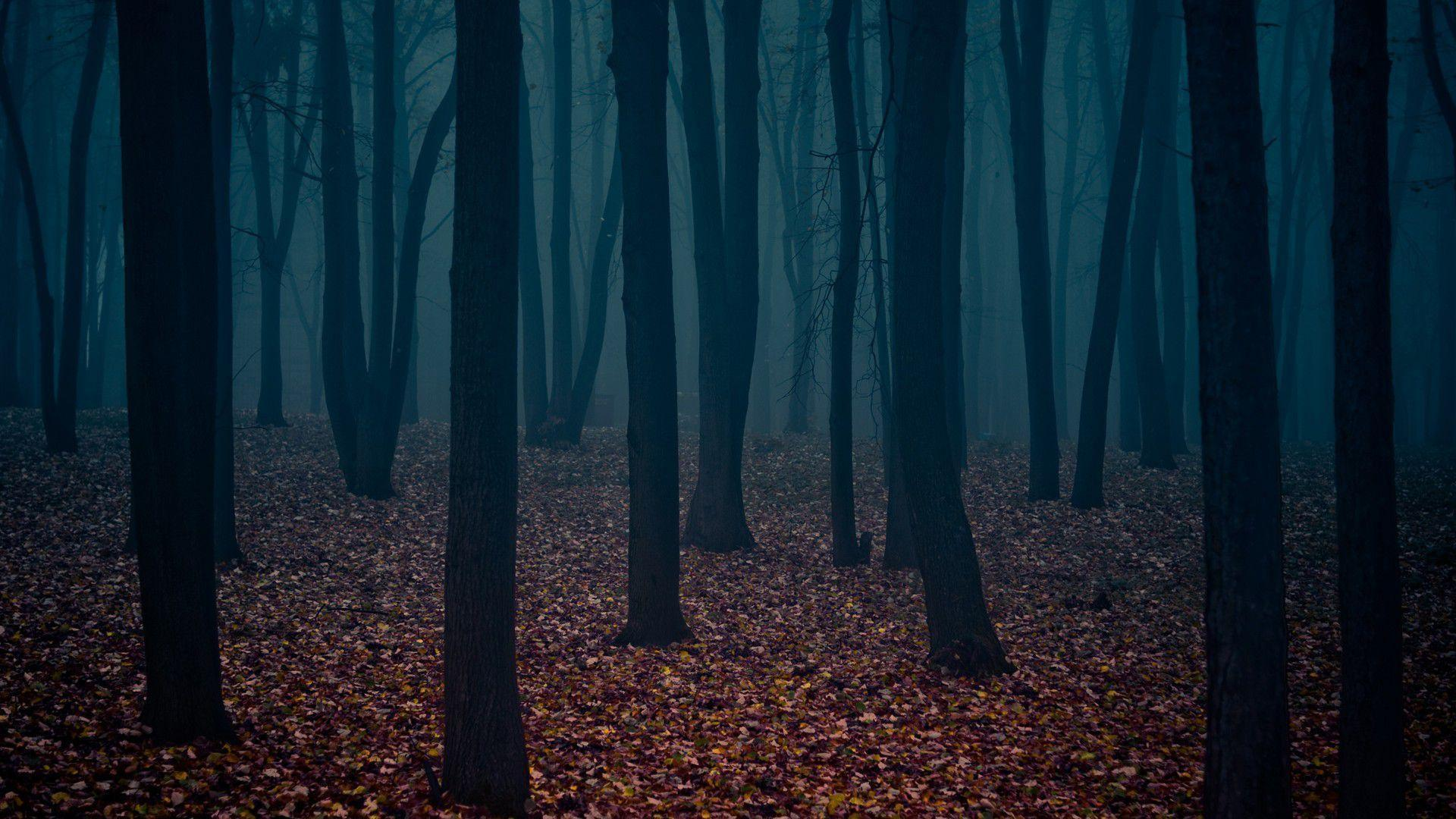 dark places forest trees - photo #22