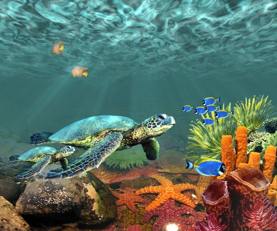 Hd Ocean Wallpaper: Underwater Desktop Backgrounds