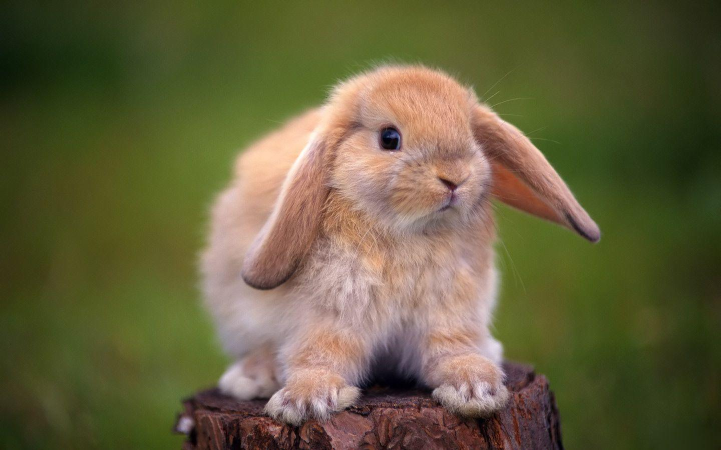 Bunny wallpapers wallpaper cave bunny hd wallpapers hd wallpapers inn voltagebd Image collections