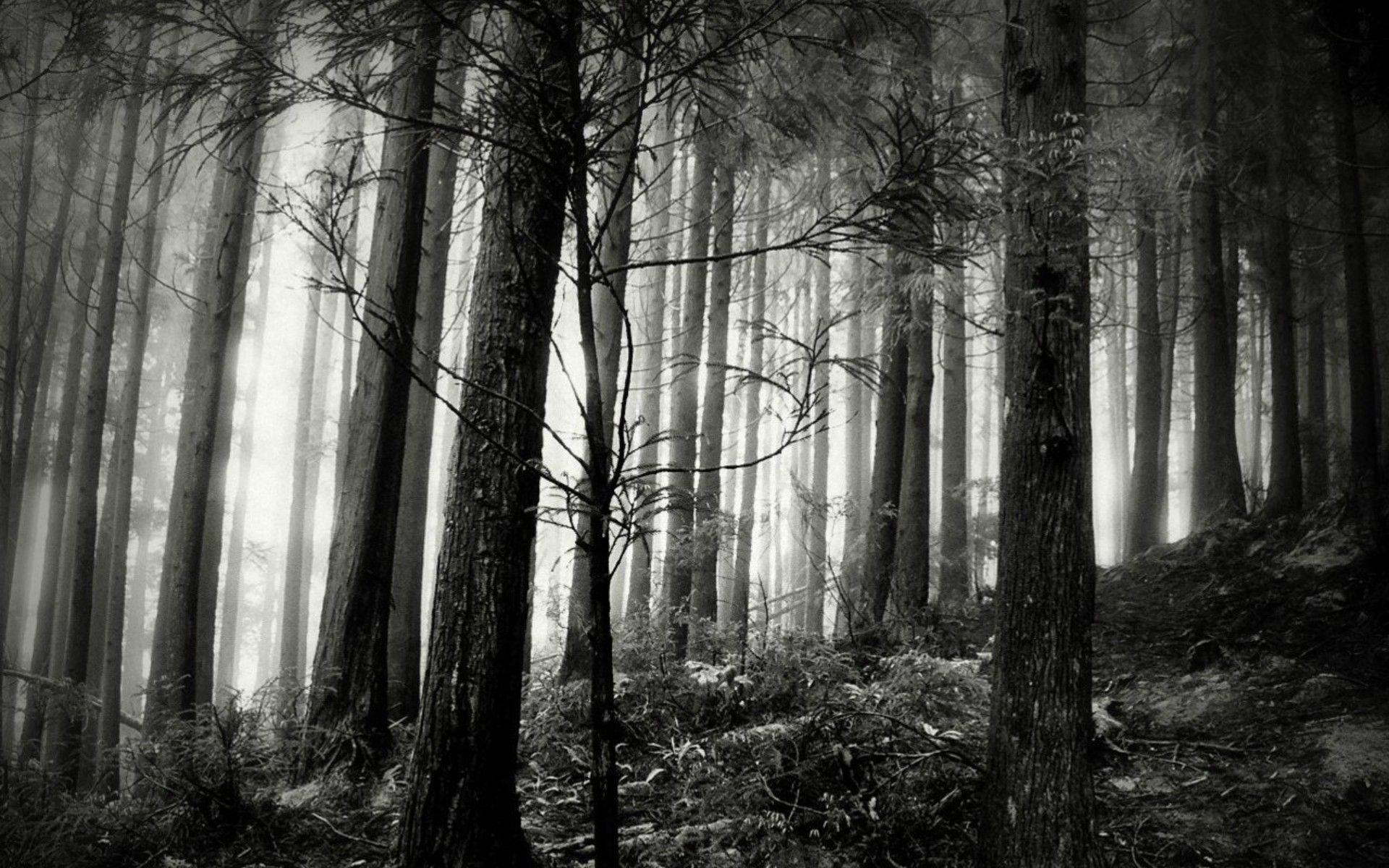 Black forest wallpapers wallpaper cave for Black and white forest wall mural