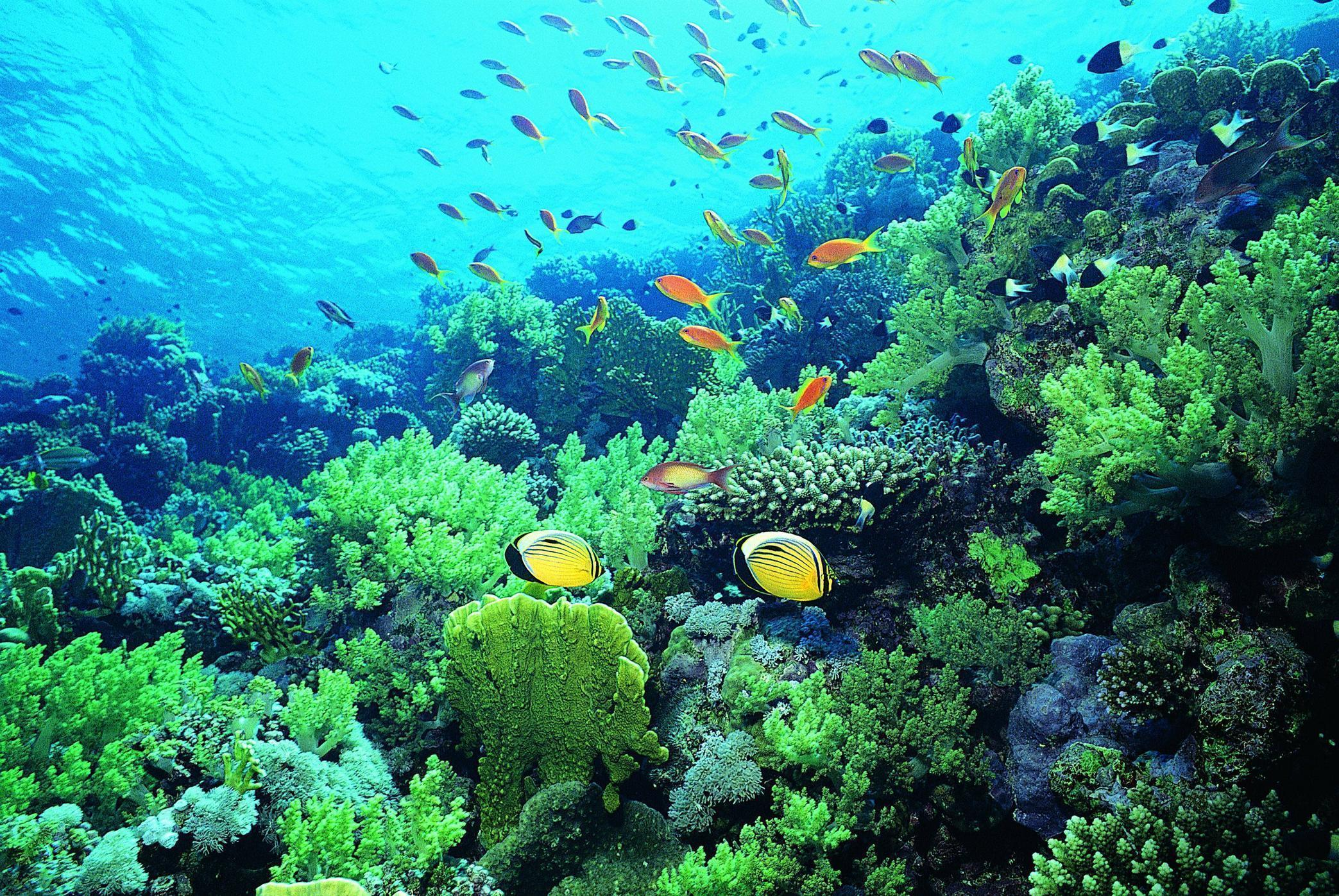 Green Coral Reef Under Water, Under Water Wallpaper, hd phone ...