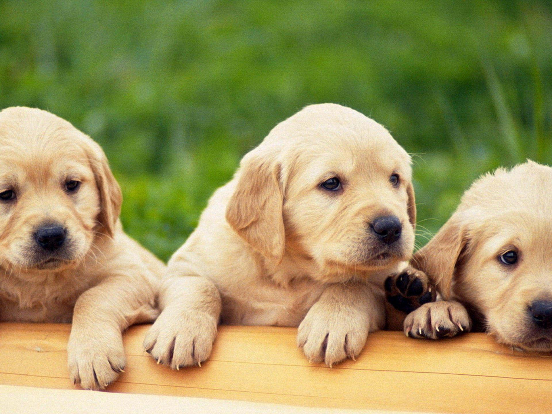 Free Puppy Dog Wallpapers