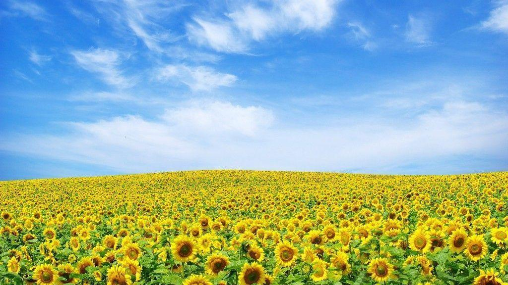 flowers-wallpapers-for-desktop-full-size-hd-2 | Best Web For ...