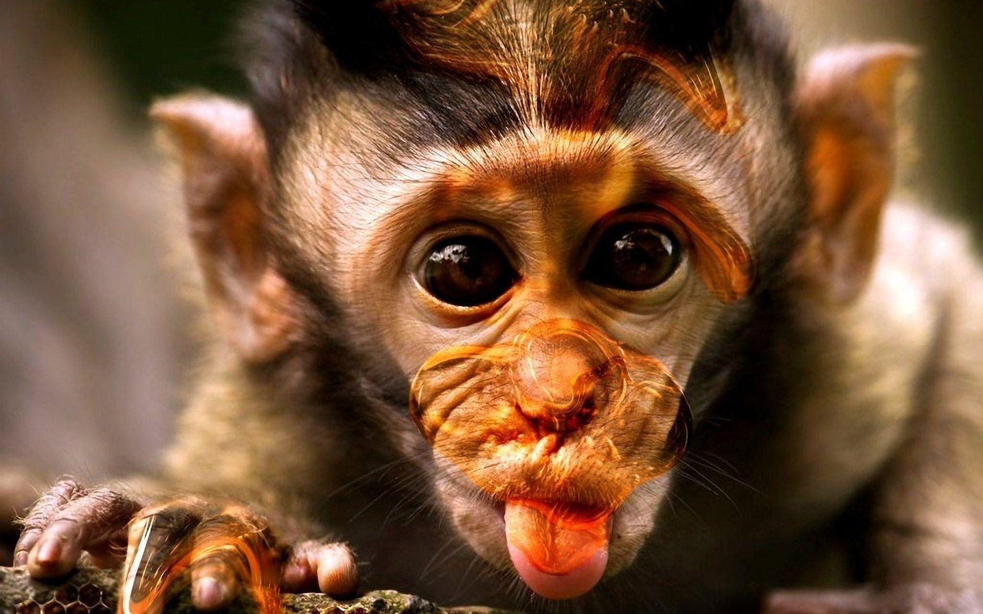 funny monkey wallpaper - photo #8