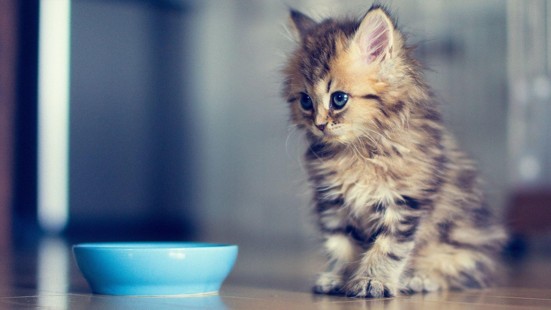 Funny Kitten Wallpapers Wallpaper