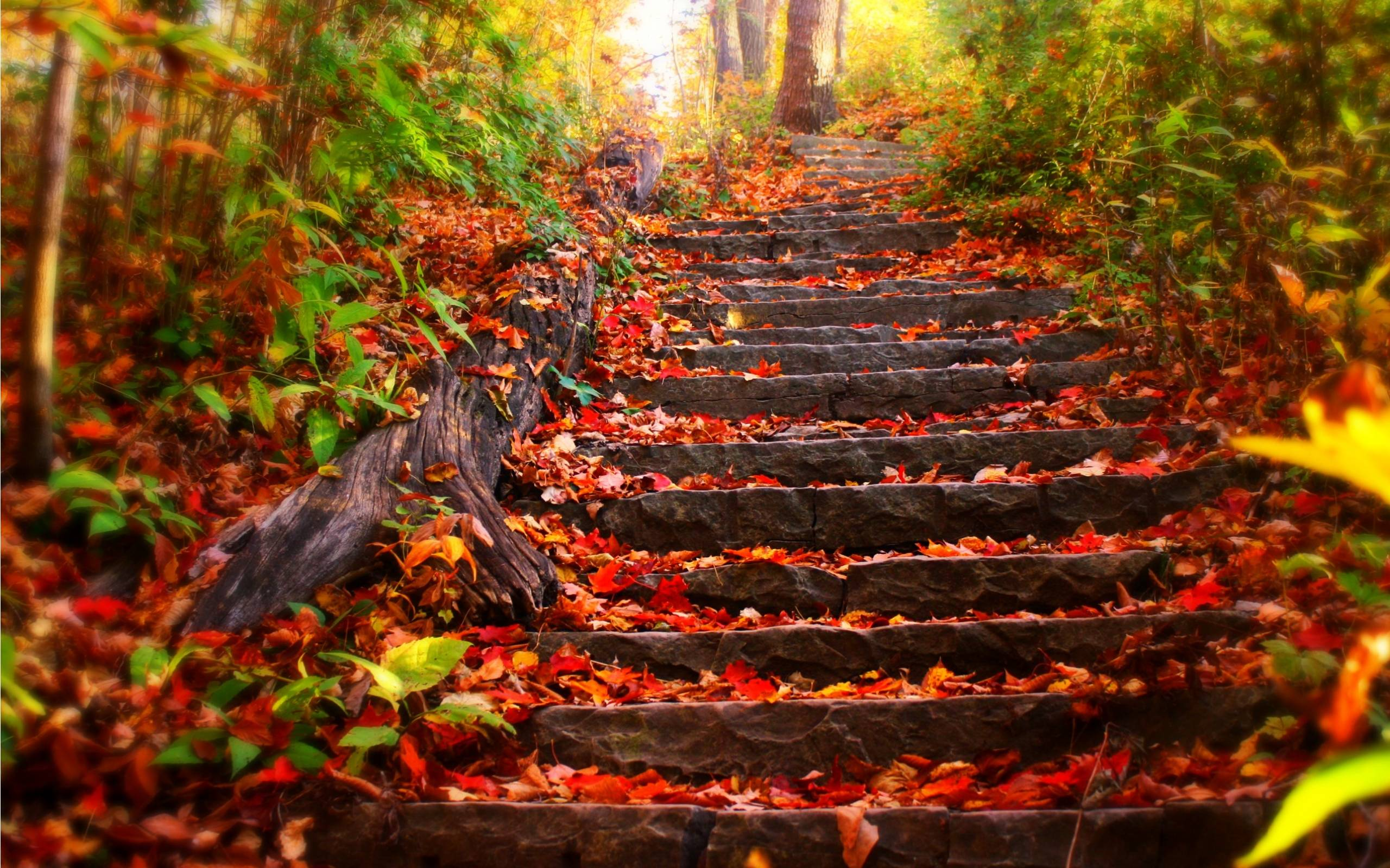 fall nature wallpaper for computer - photo #46