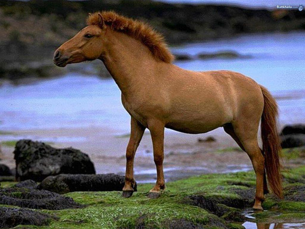 spring wild horse wallpaper - photo #48