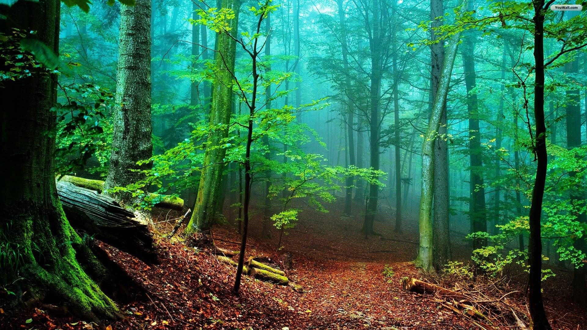 Hd Wallpapers Nature Forest Images 3 HD