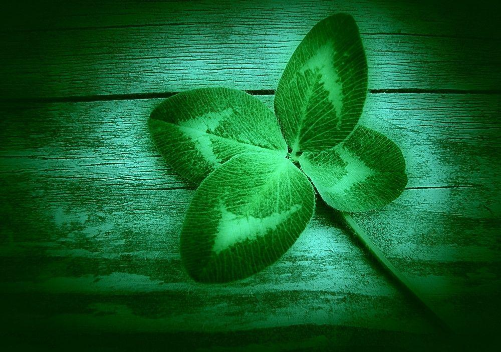 Pix For > 4 Leaf Clover Wallpapers