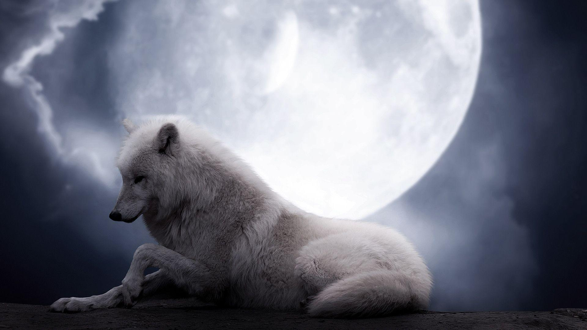 White Wolf Wallpapers on Frenzia