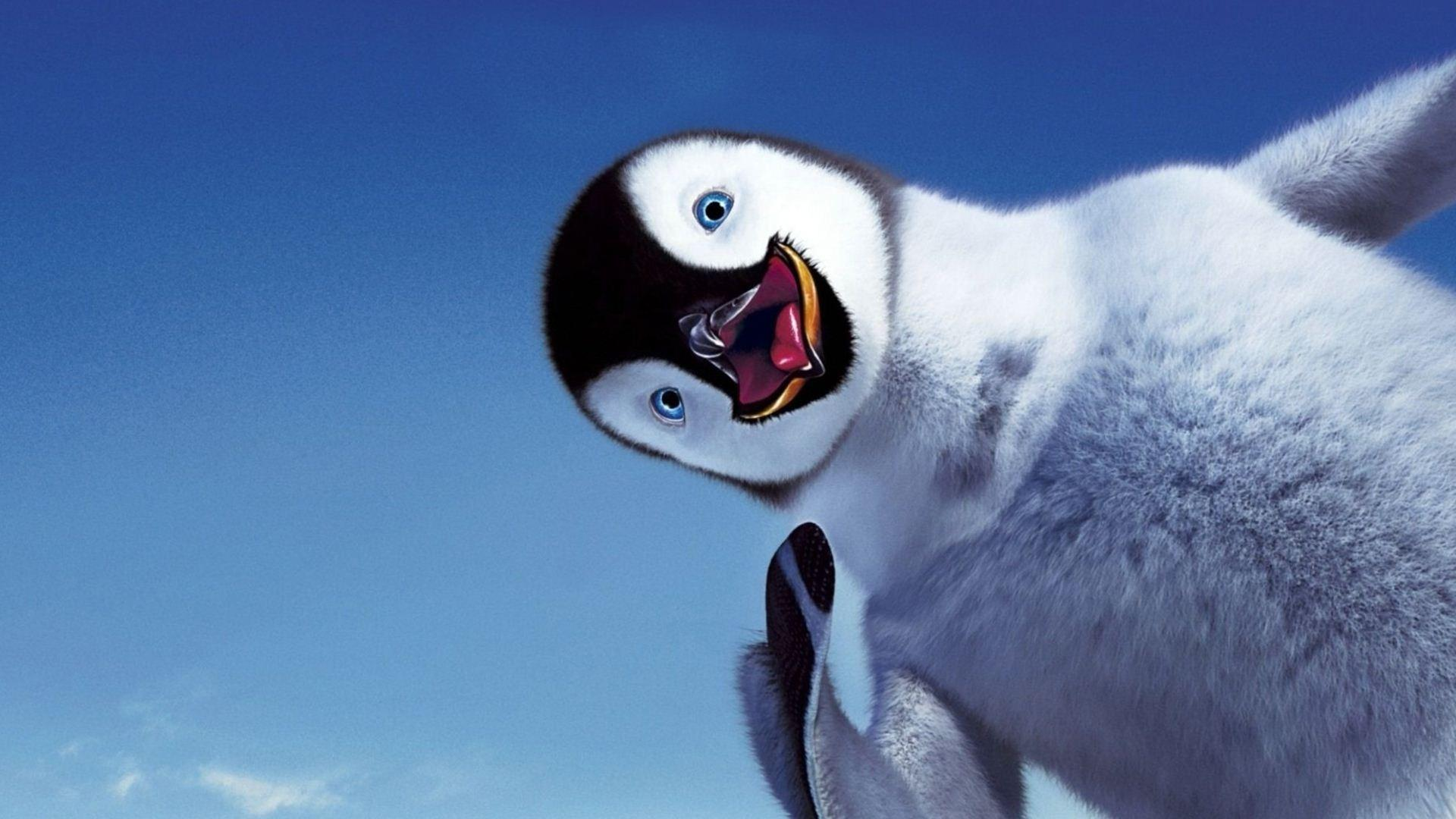 Cute Baby Penguin Wallpaper HD 8561