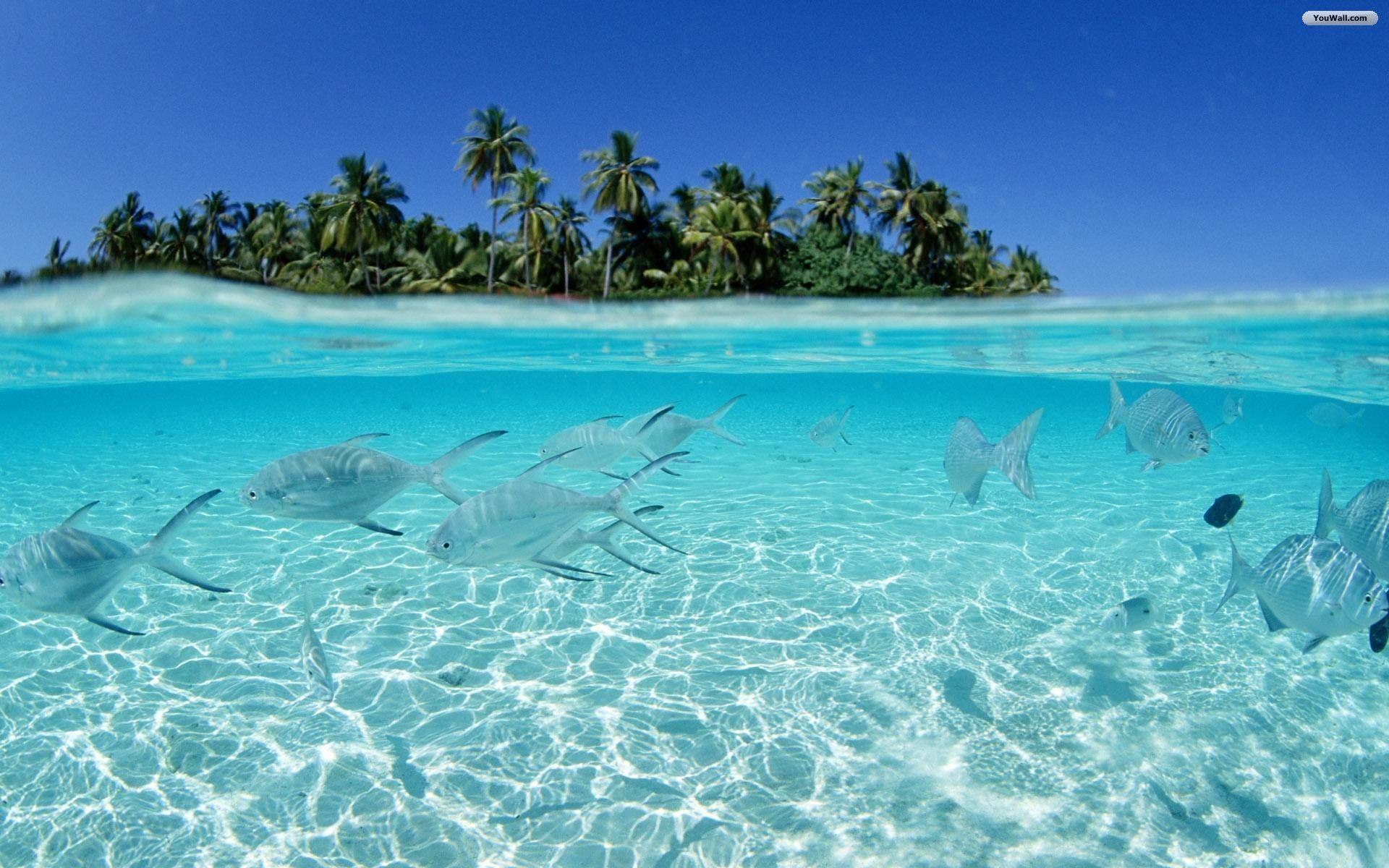 Clear Water Fishes Awesome Hd Desktop Wallpapers In High Resolution