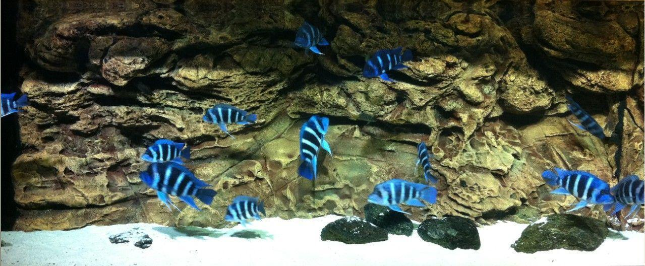 Aquarium Backgrounds 21 Cool Background And Wallpaper Home Design ...