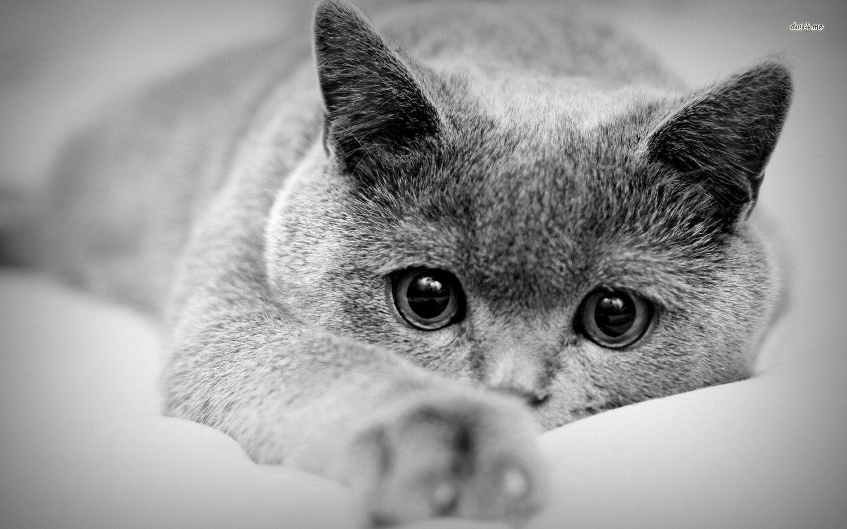 Black and white cat wallpapers wallpaper cave - Kitten wallpaper ...