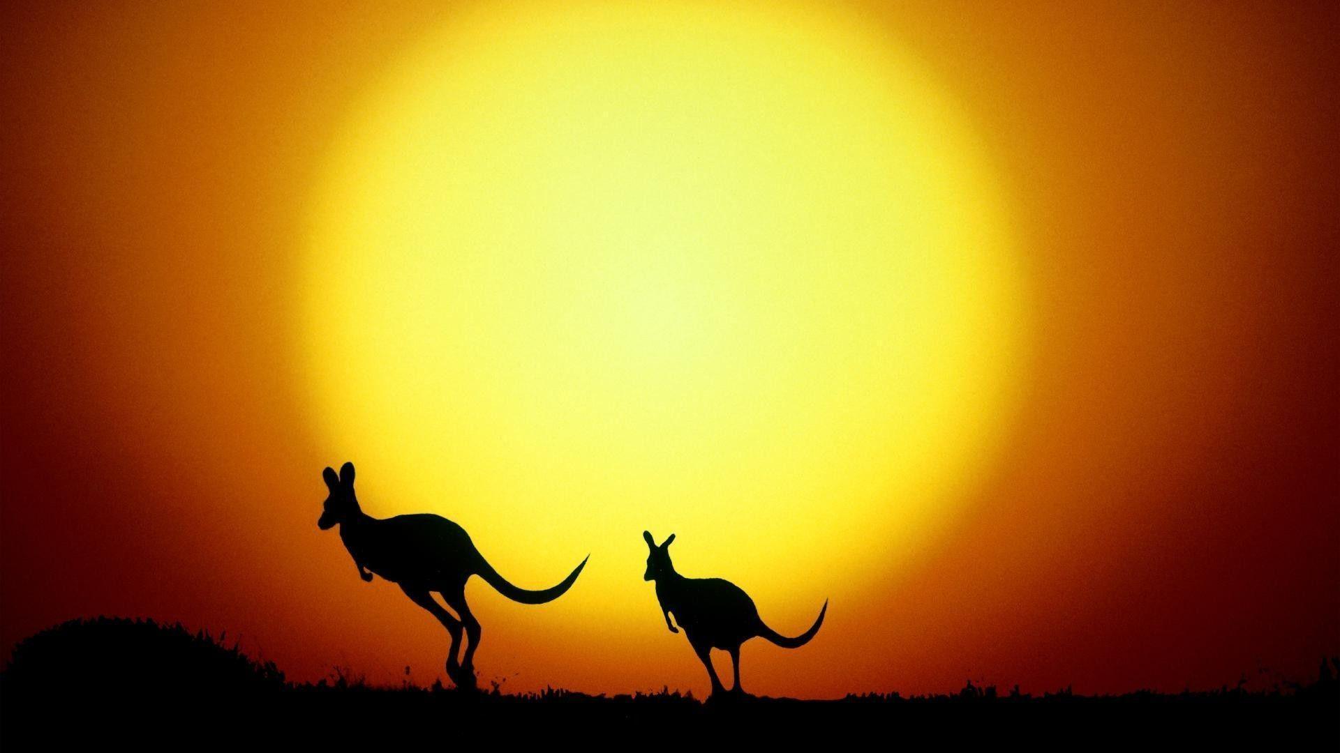 Kangaroo silhouettes Wallpaper #
