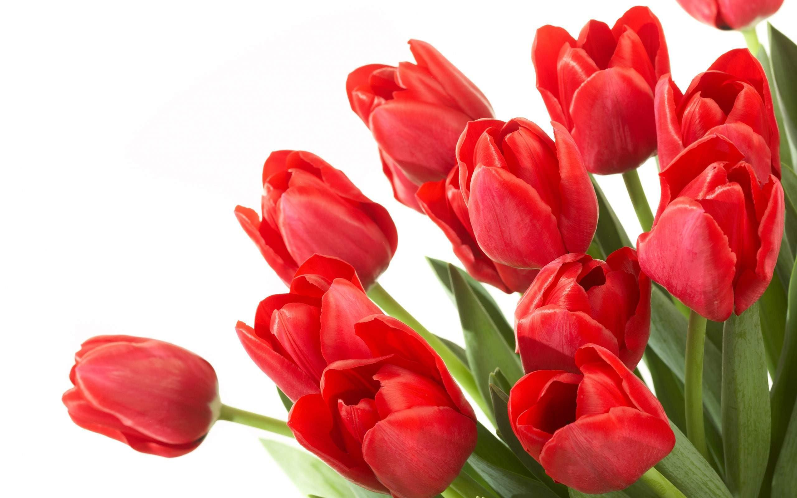Flowers For Red Wallpaper