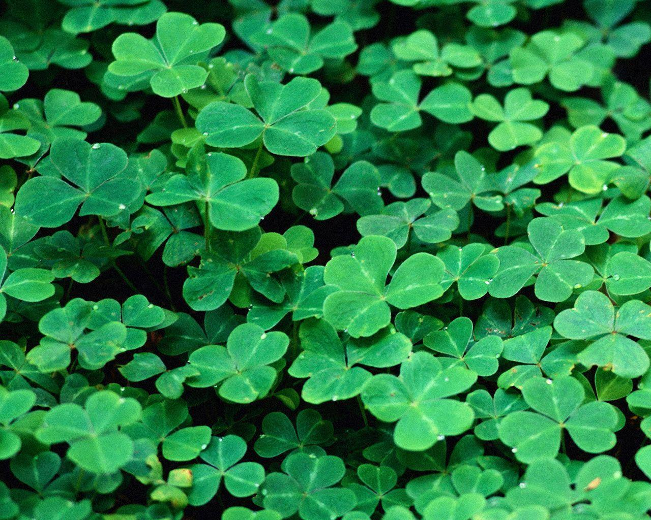 Desktop Wallpaper · Gallery · Miscellaneous · Saint Patrick's Day ...