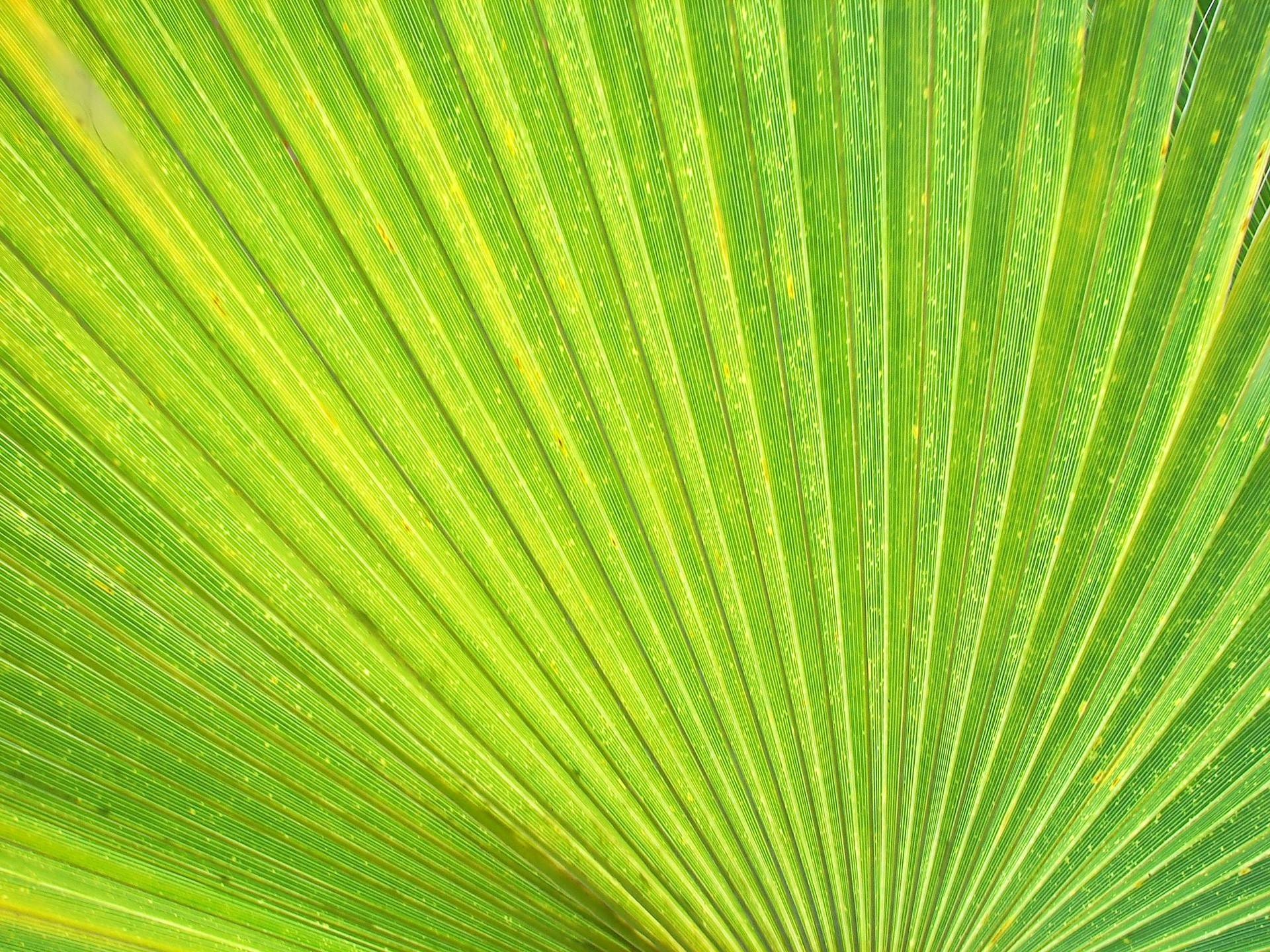 light green leaves background - photo #29