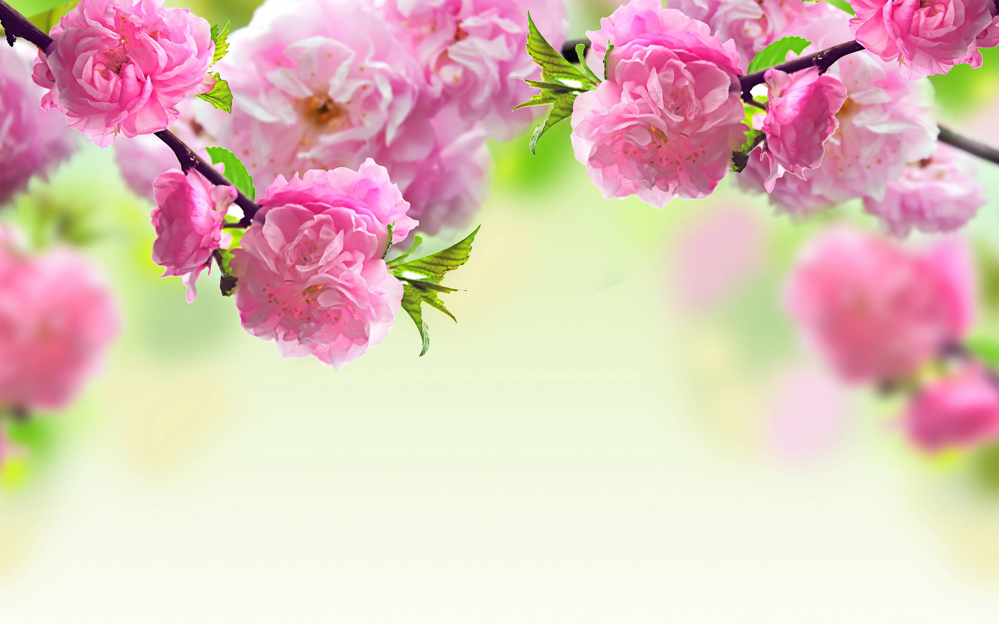 wallpapers pink flowers - photo #21