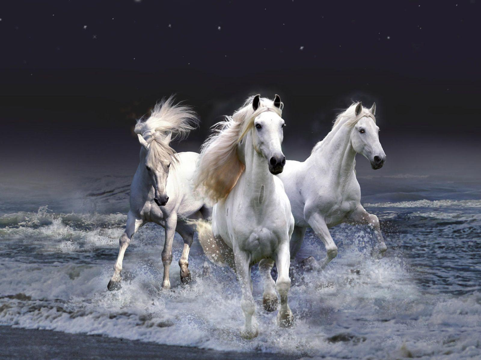 Beautiful White Horses wallpapers