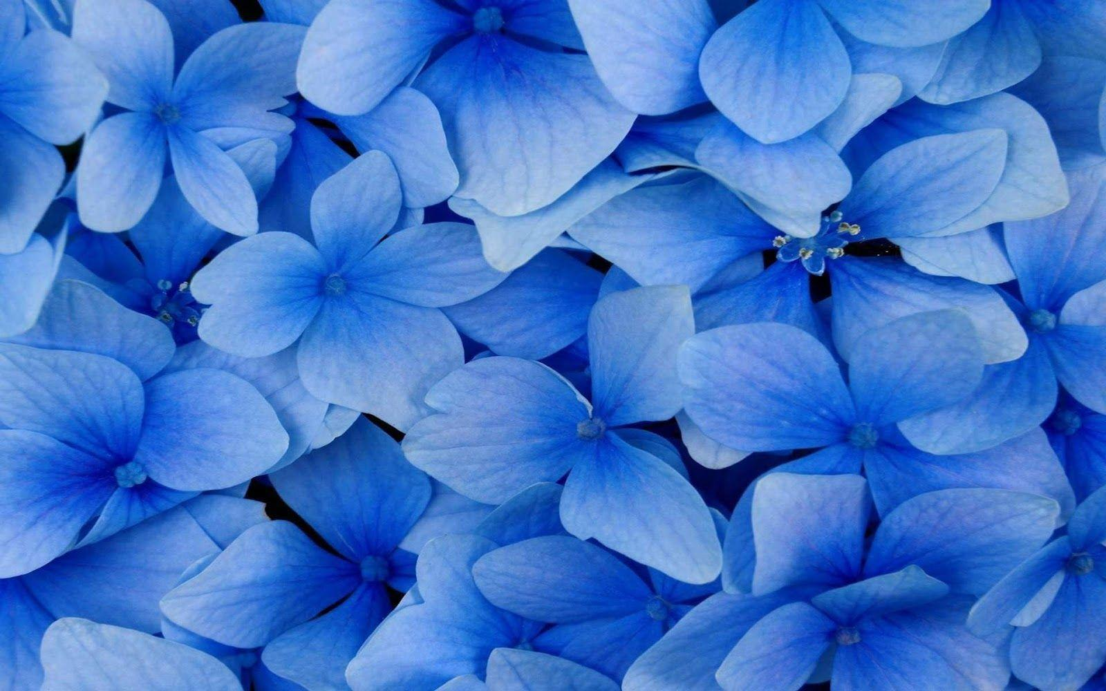 Blue flowers wallpapers wallpaper cave hd blue flowers hd desktop 10 hd wallpapers izmirmasajfo Image collections