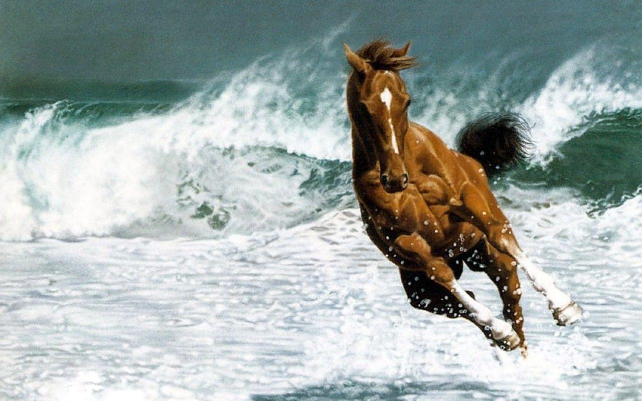 Beautiful Horse - Horses Wallpaper (22410583) - Fanpop