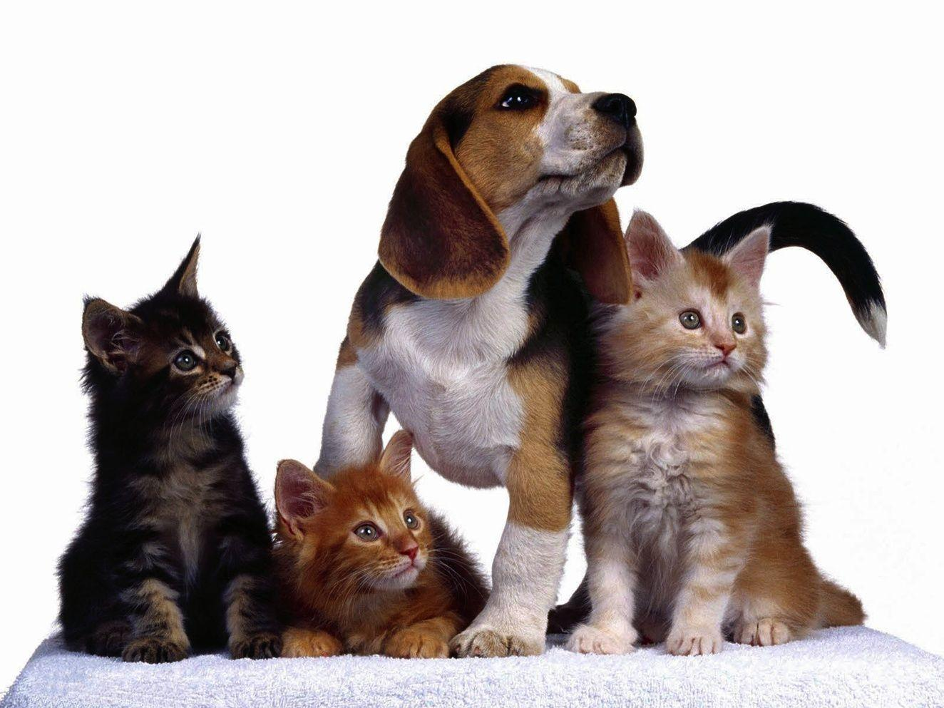 cat and dog wallpapers wallpaper cave