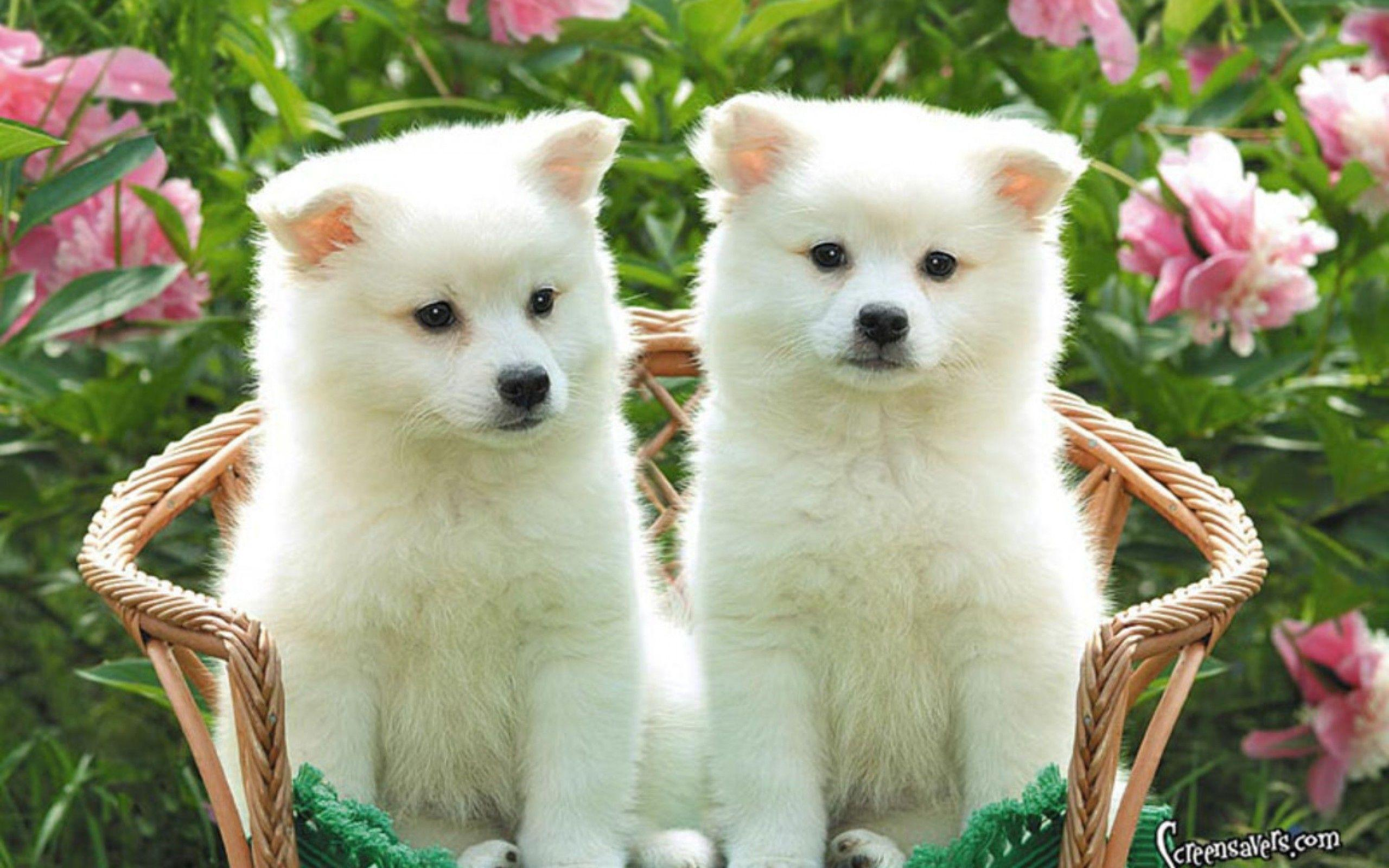Cute Puppies Wallpapers HD Wallpaper