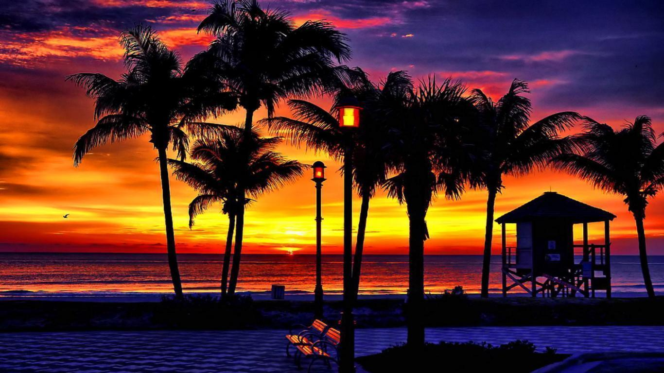 Coconut tree wallpaper desktop - earth moving machinery images of hearts