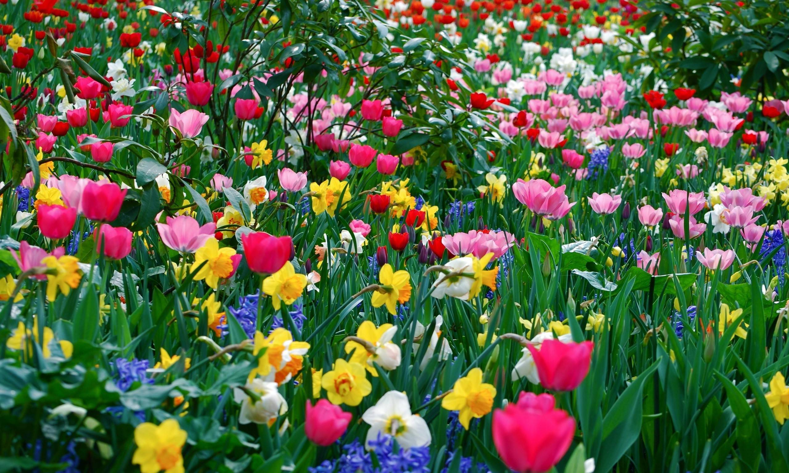 Pictures of spring flowers desktop backgrounds kidskunstfo spring flower wallpaper backgrounds wallpaper cave mightylinksfo