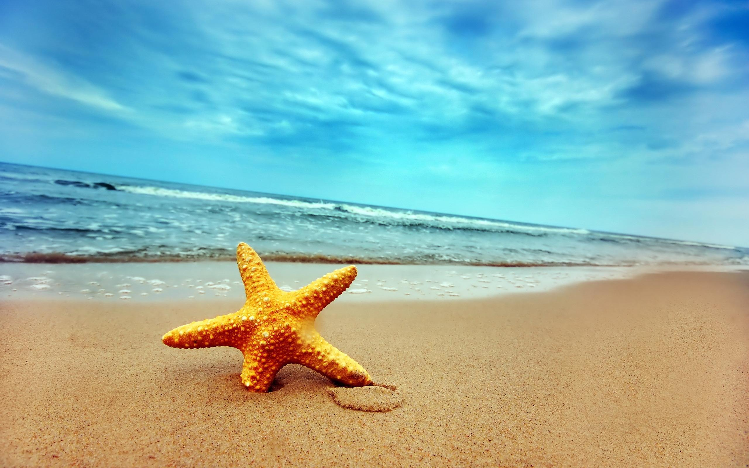Background image beach - Download Free 2560x1600 Starfish On Beach Desktop Wallpaper Background