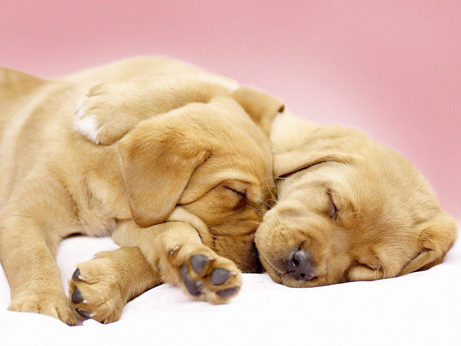 Cute Dog Wallpapers Desktop