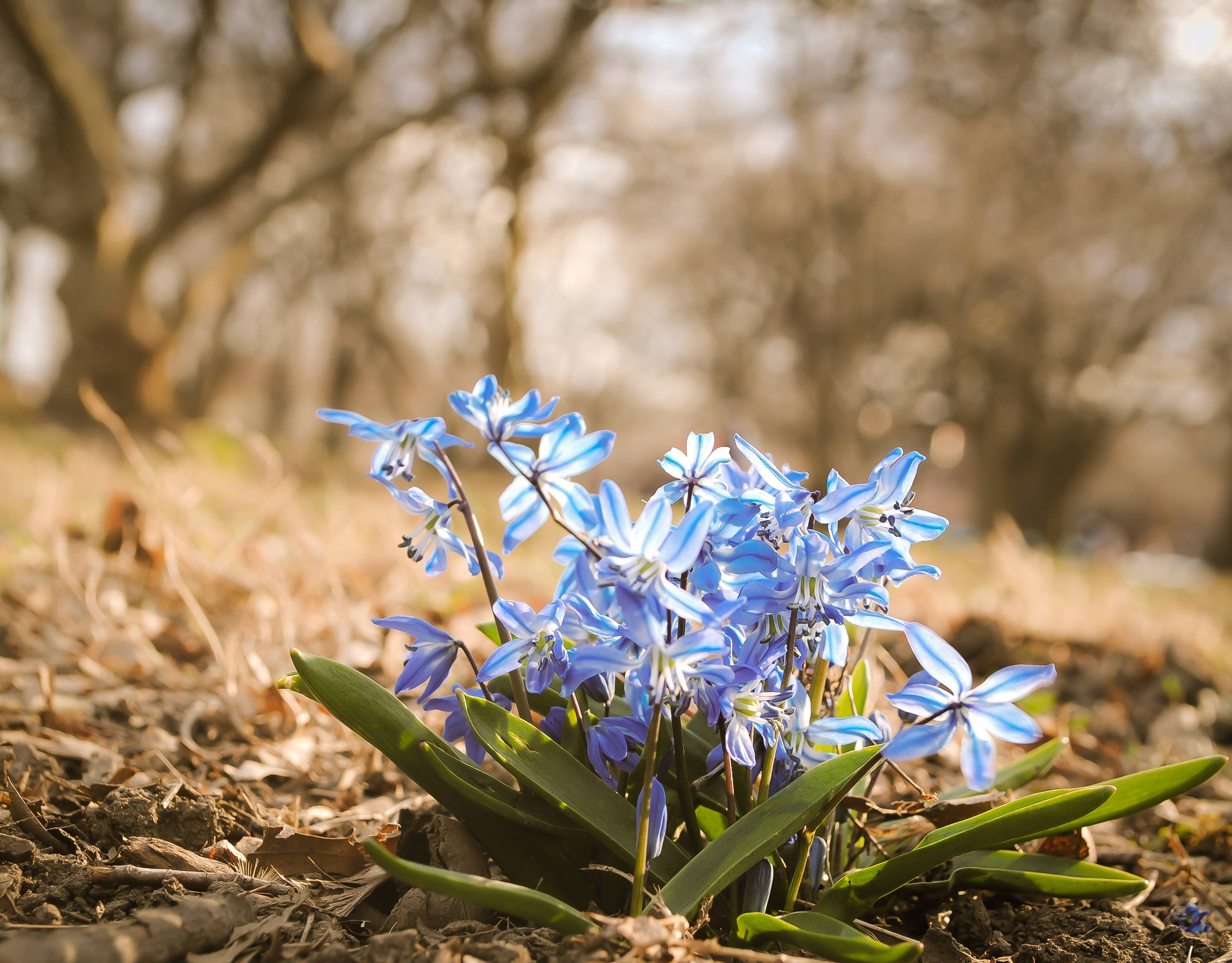 Blue Wildflowers Spring Pretty Flowers Beautiful HD Wallpapers